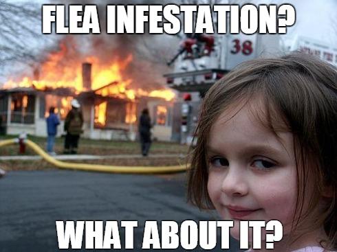 flea meme 3